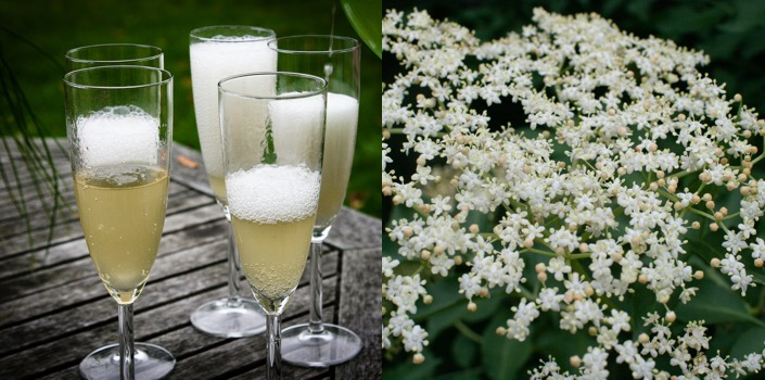 Elderflower champagne and elder flowers